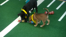 Meet this year's adorable Puppy Bowl players