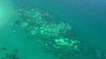 Great Barrier Reef Experiencing Worst Mass Coral Bleaching On Record