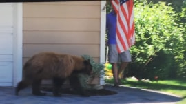 Watch Man Has Surprise Run In With Bear