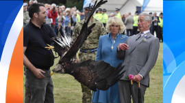 Trending: A bald eagle makes a royal mess