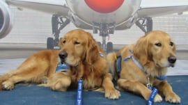 Say what? Adorable puppies may be coming to an airport near you