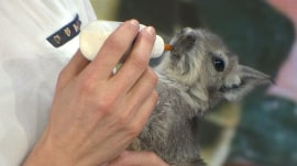 Adorable baby animals: Angora rabbits, a teeny tortoise, and more