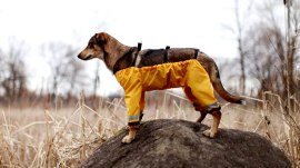 Should dogs wear pants on all 4 legs? Canadian company says yes