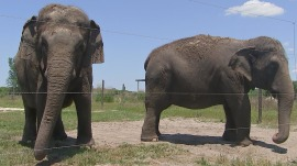Ringling Bros. elephants retire from circus