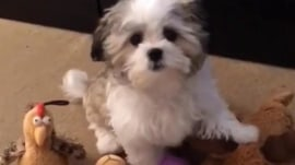 Dog's best friend: Watch this pup paw his favorite toys