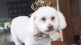 Kathie Lee's beloved dog King Louis passes away