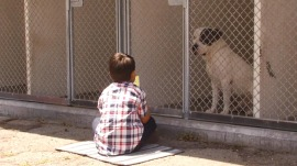 6-year-old with autism has weekly reading date at animal shelter