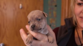 See this orphaned puppy's new family!