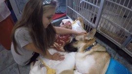 Dog saves 7-year-old from rattlesnake