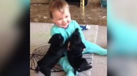 Too cute! Baby Louie races adorable pug puppies