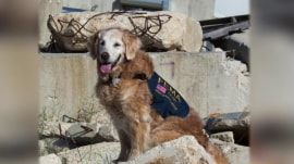 Last 9/11 Ground Zero search dog dies just shy of 17th birthday