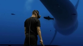 Virtual reality immerses users into once unreachable worlds