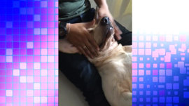 Watch this dog's stress melt away as he gets a massage