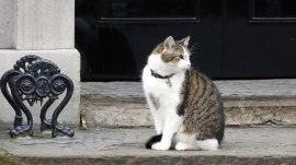 Larry the Cat to remain at prime minister's home after Cameron's exit