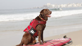 Surfing dog rides the waves in Rio!