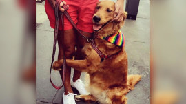 Golden retriever hugs strangers, spreads joys in New York City streets