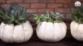How to make decorative pumpkin gardens