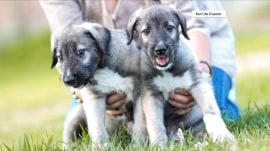 Take a look at the first-ever set of identical twin puppies