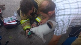 Firefighters rescue Cleo the cat from house fire