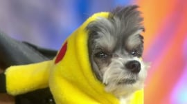 See this year's most popular pet costumes, tips to keep them calm this Halloween
