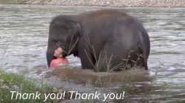 This elephant jumped to save a man she thought was in trouble