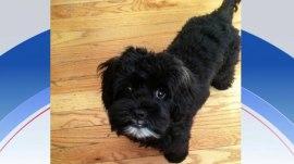 Hoda: My dog Blake wandered into my neighbor's apartment