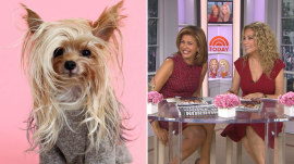 This Yorkie with 'sexy' hair has gone doggone viral