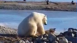 Meet the polar bear who befriended a sled dog