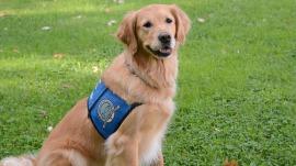 Sandy Hook comfort dog named ASPCA Dog of the Year