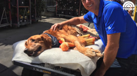 Maverick the golden retriever gets perfect day out