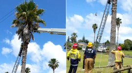 Caught on video: Cat leaps from top of palm tree and survives