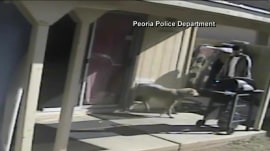 Caught on camera: Thieves break into home after distracting dog with treats