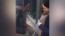 Orangutan brings pregnant woman to tears with a kiss