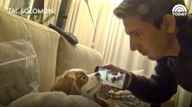 This dog, awakened by his own snoring, is the cutest thing you'll see all day