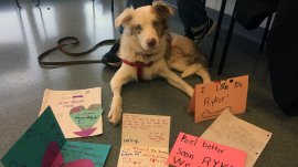 Dog in need of surgery gets donation from second-grade class