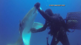Watch: Diver pulls huge hook from shark's belly off Florida coast