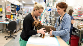 KLG gets blown away by NYC's 24/7 Animal Medical Center