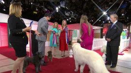 Meet 3 canine stars of the Beverly Hills Dog Show