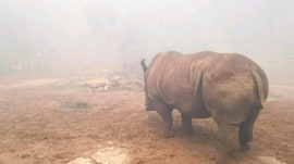 Florida wildfires: Rhino, panthers rescued as flames threaten wildlife preserve