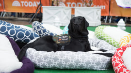 Pet beds, dog tags, more: Steals and Deals goes to the dogs!