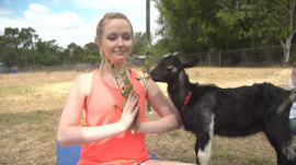 Yoga with goats is a thing! So we tried it.