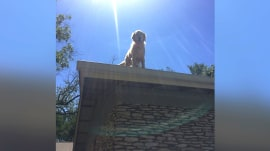 This lovable dog loves to chill out on his roof