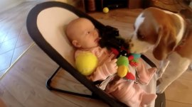 Dog takes baby's toy, apologizes by bringing endless toys