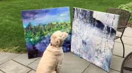 This dog is completely mesmerized by her owner's paintings