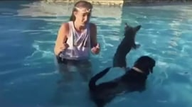 Doggy dip: Watch this black Lab and his little friend go for a swim