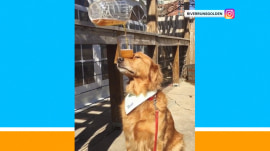 This dog can balance just about anything on his head