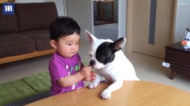 Watch this naughty dog snatch toddler's snack