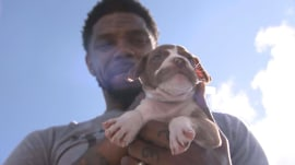 Miami Heat players are helping to find new homes for animals displaced by Hurricane Irma