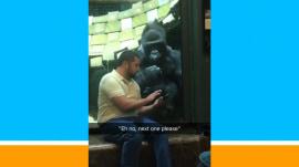 Watch this gorilla go ape for iPhone photos of female gorillas