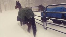 2 horses with horse sense gallop out into snow (and right back in again)